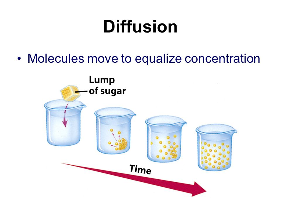 Diffusion Molecules move to equalize concentration