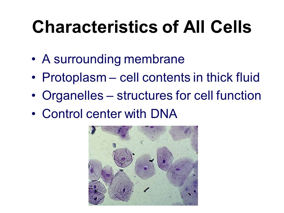 Characteristics of All Cells A surrounding membrane Protoplasm – cell contents in thick fluid Organelles – structures for cell function Control center with DNA