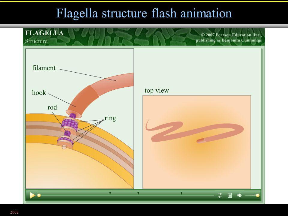 2008 Flagella structure flash animation