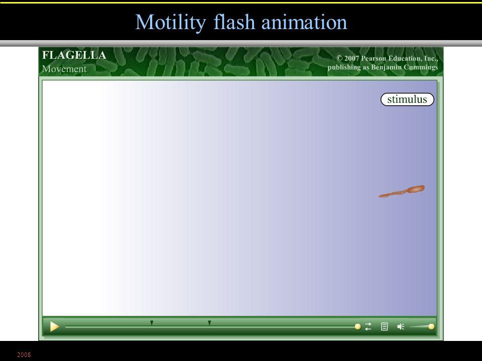 2008 Motility flash animation