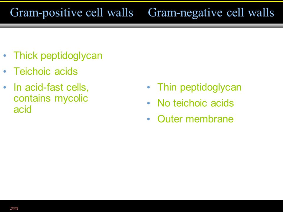 2008 Thick peptidoglycan Teichoic acids In acid-fast cells, contains mycolic acid Gram-positive cell wallsGram-negative cell walls Thin peptidoglycan No teichoic acids Outer membrane