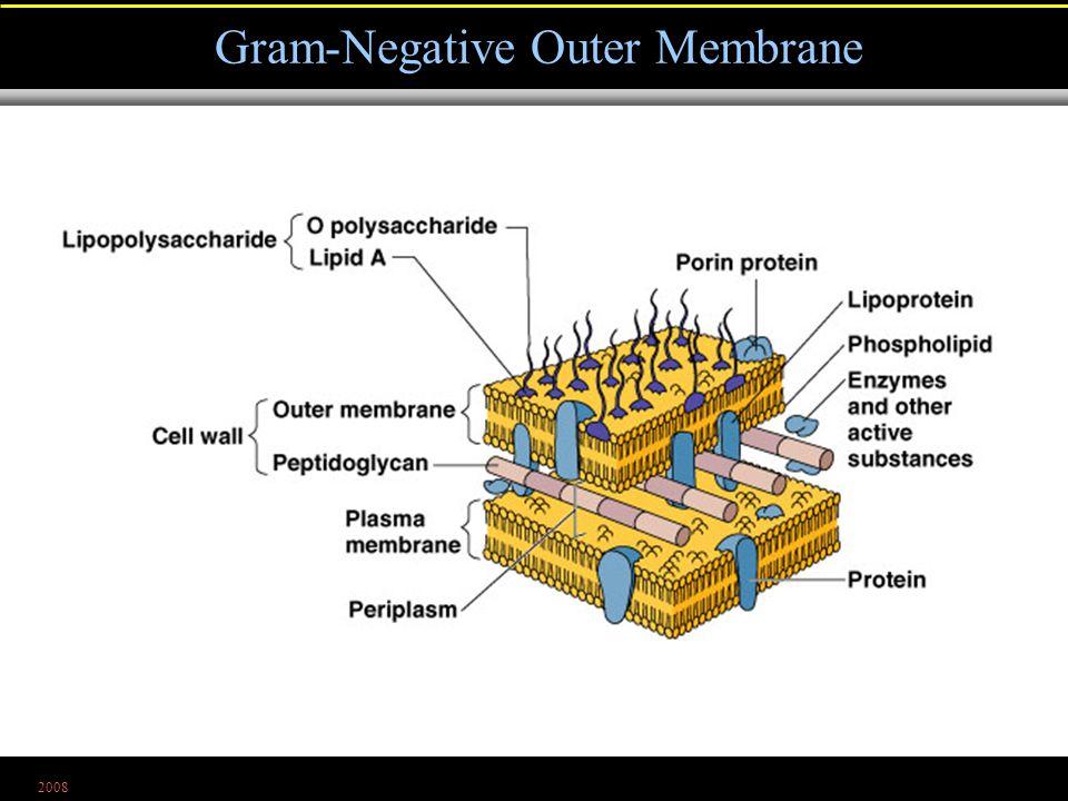 2008 Gram-Negative Outer Membrane Figure 4.13c