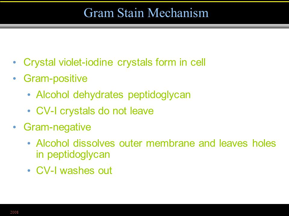 2008 Crystal violet-iodine crystals form in cell Gram-positive Alcohol dehydrates peptidoglycan CV-I crystals do not leave Gram-negative Alcohol dissolves outer membrane and leaves holes in peptidoglycan CV-I washes out Gram Stain Mechanism