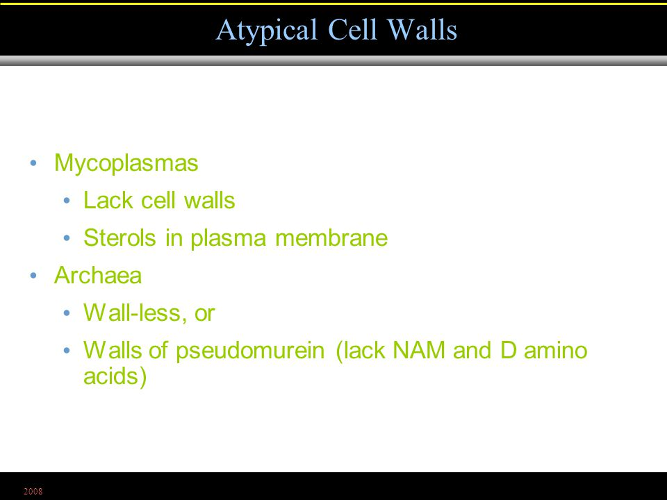 2008 Mycoplasmas Lack cell walls Sterols in plasma membrane Archaea Wall-less, or Walls of pseudomurein (lack NAM and D amino acids) Atypical Cell Walls