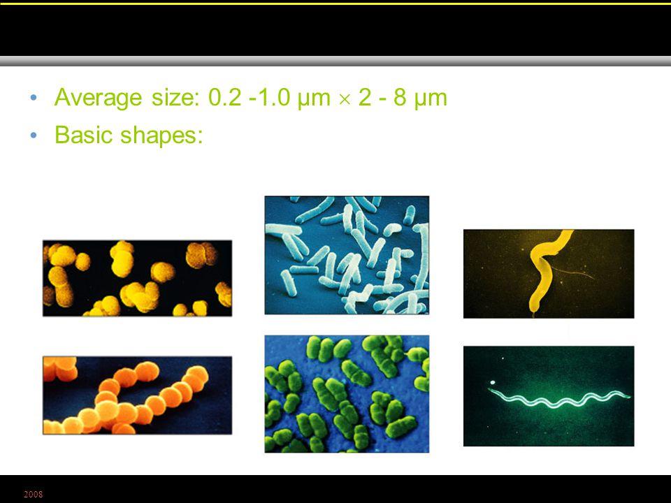 2008 Average size: 0.2 -1.0 µm  2 - 8 µm Basic shapes: