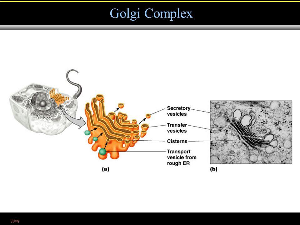 2008 Golgi Complex Figure 4.26