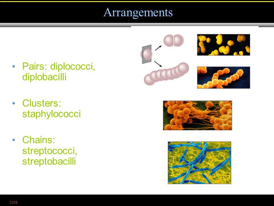 2008 Pairs: diplococci, diplobacilli Clusters: staphylococci Chains: streptococci, streptobacilli Arrangements