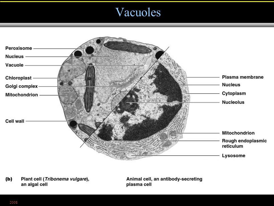 2008 Vacuoles Figure 4.22b