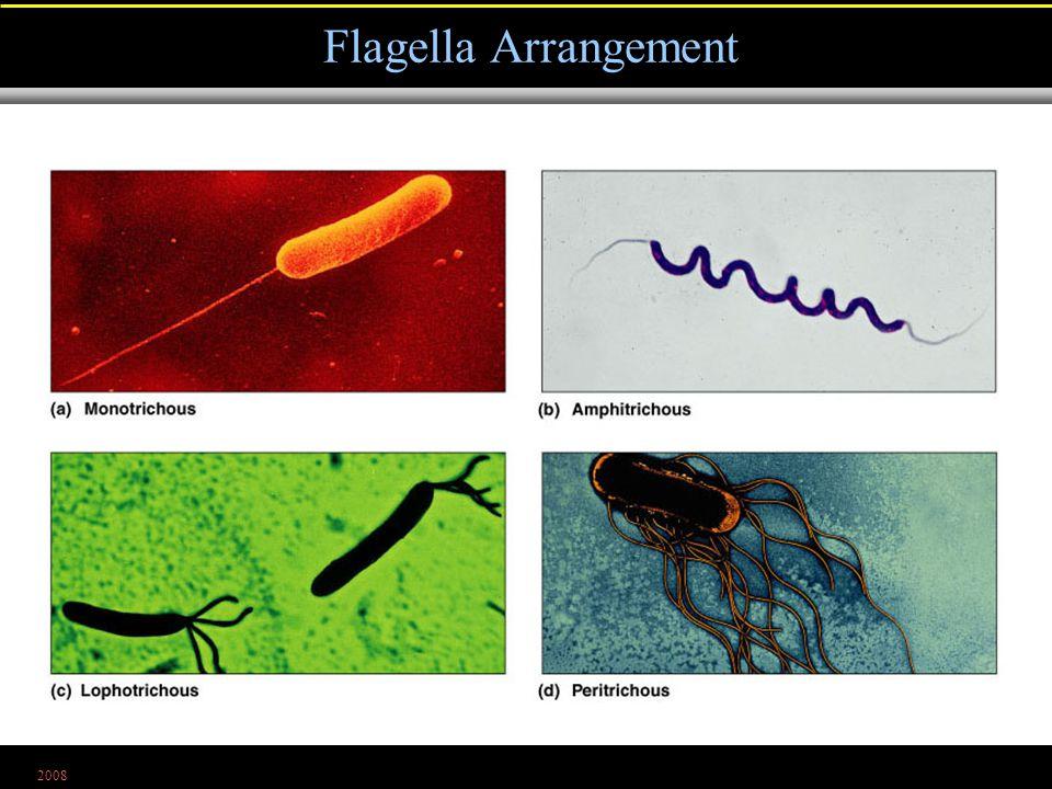 2008 Flagella Arrangement Figure 4.7