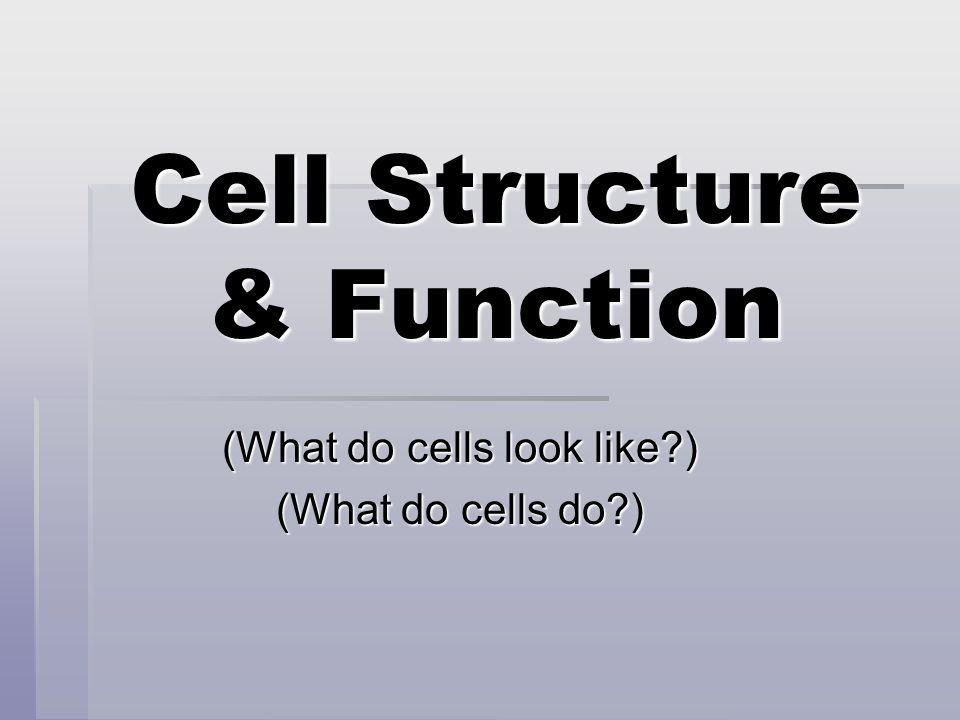 2 main types of cells  Prokaryotes (Prokaryotic)  Eukaryotes (Eukaryotic)