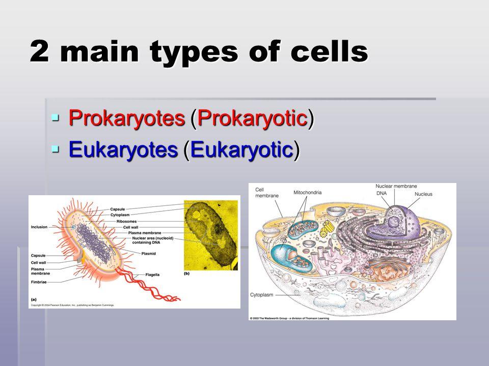 Nuclear pore  Controls what molecules can enter/leave the nucleus http://www.abdn.ac.uk/emunit/emunit/temcells/images/nuclear%20po re%20%20.jpg