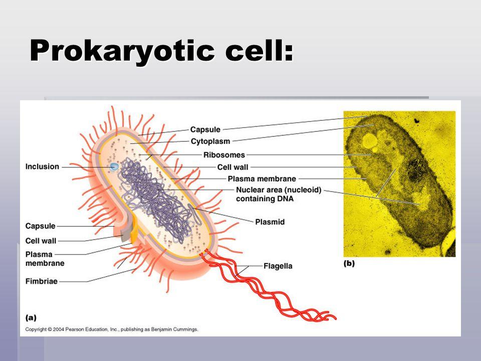 Eukaryotes  Complex cells  Both unicellular & multicellular organisms.