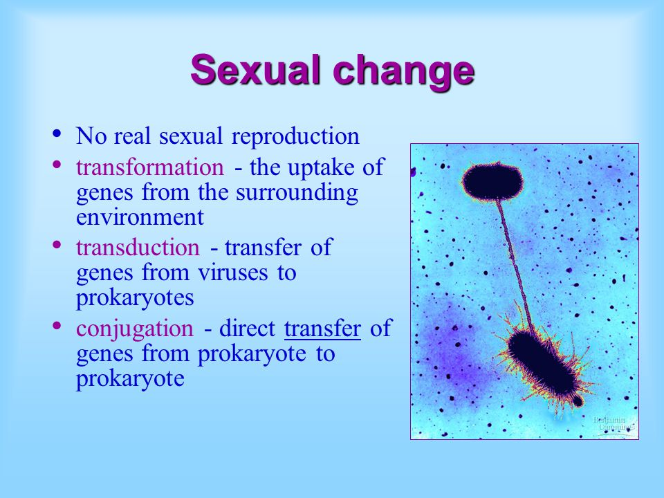 Sexual change No real sexual reproduction transformation - the uptake of genes from the surrounding environment transduction - transfer of genes from viruses to prokaryotes conjugation - direct transfer of genes from prokaryote to prokaryote