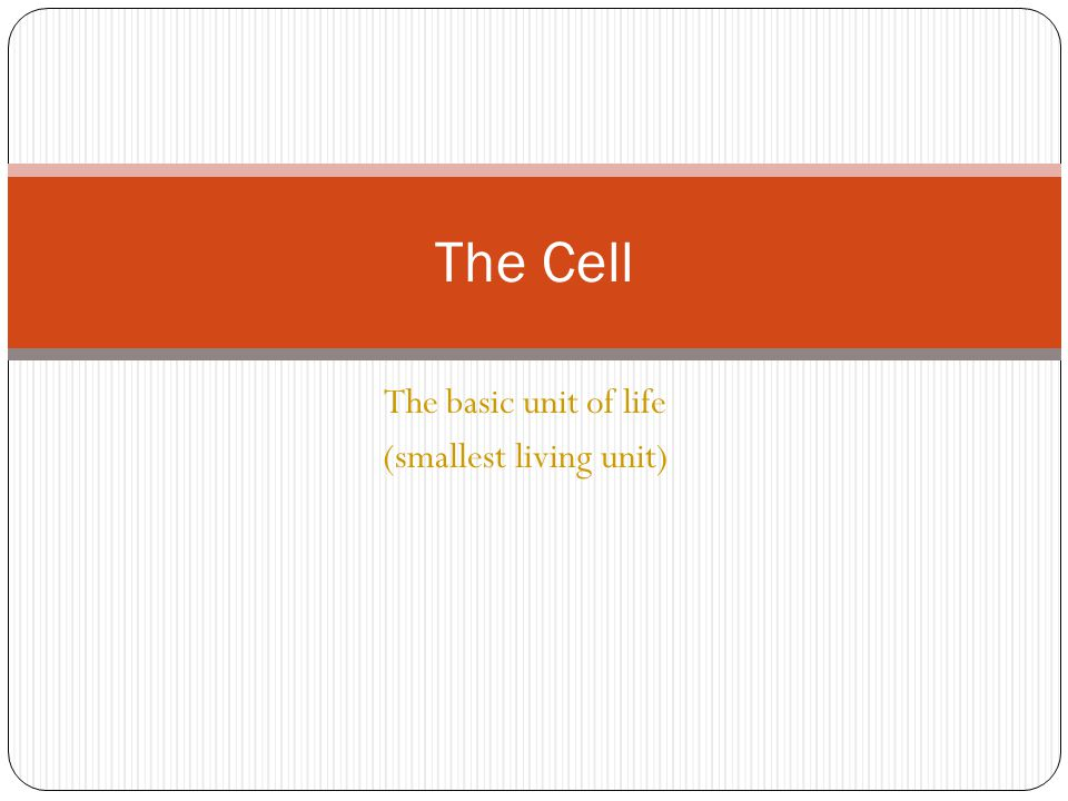 The basic unit of life (smallest living unit) The Cell