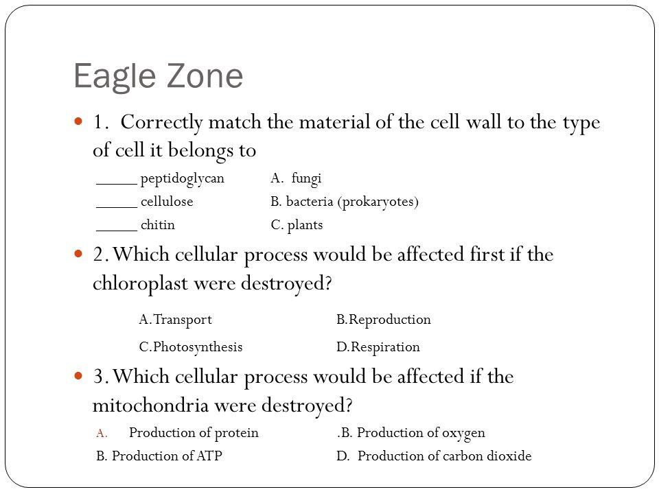 Eagle Zone 1.