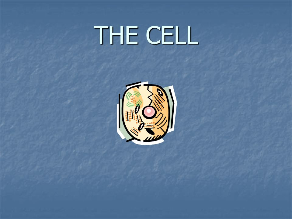 How about this cell?