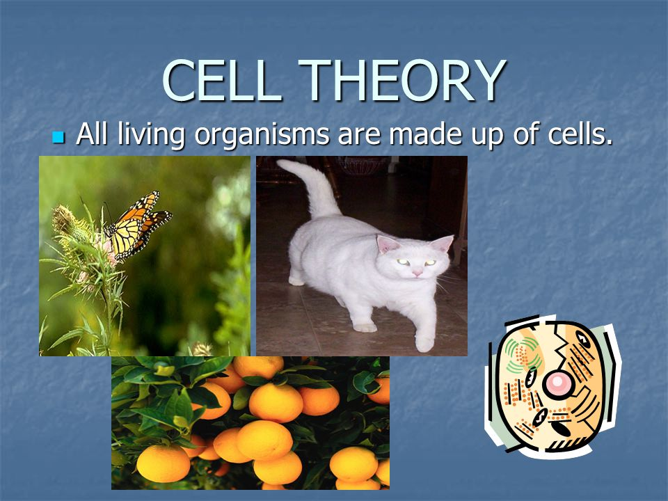 CELL THEORY All living organisms are made up of cells. All living organisms are made up of cells.