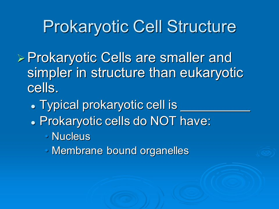 Prokaryotic Cell Structure  Prokaryotic Cells are smaller and simpler in structure than eukaryotic cells. Typical prokaryotic cell is __________ Typi