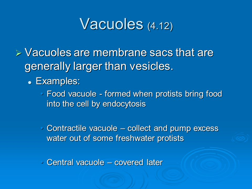 Vacuoles (4.12)  Vacuoles are membrane sacs that are generally larger than vesicles. Examples: Examples: Food vacuole - formed when protists bring fo