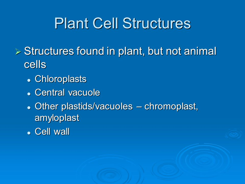 Plant Cell Structures  Structures found in plant, but not animal cells Chloroplasts Chloroplasts Central vacuole Central vacuole Other plastids/vacuo