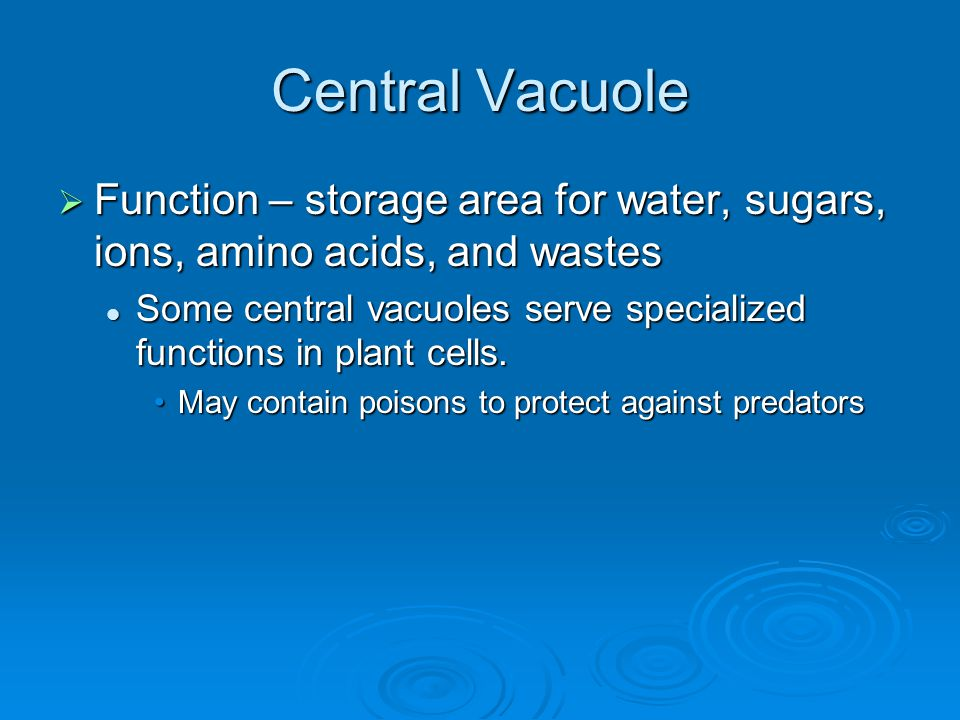 Central Vacuole  Function – storage area for water, sugars, ions, amino acids, and wastes Some central vacuoles serve specialized functions in plant