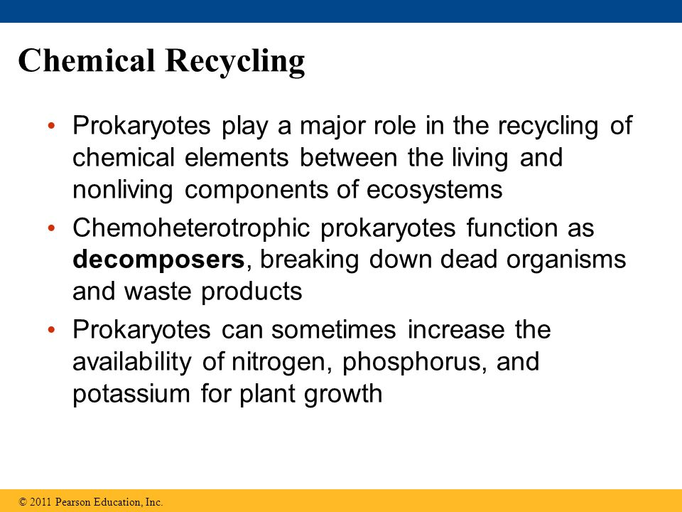Chemical Recycling Prokaryotes play a major role in the recycling of chemical elements between the living and nonliving components of ecosystems Chemo