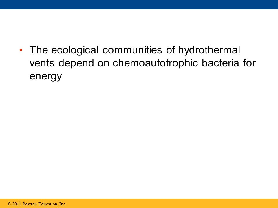 The ecological communities of hydrothermal vents depend on chemoautotrophic bacteria for energy © 2011 Pearson Education, Inc.