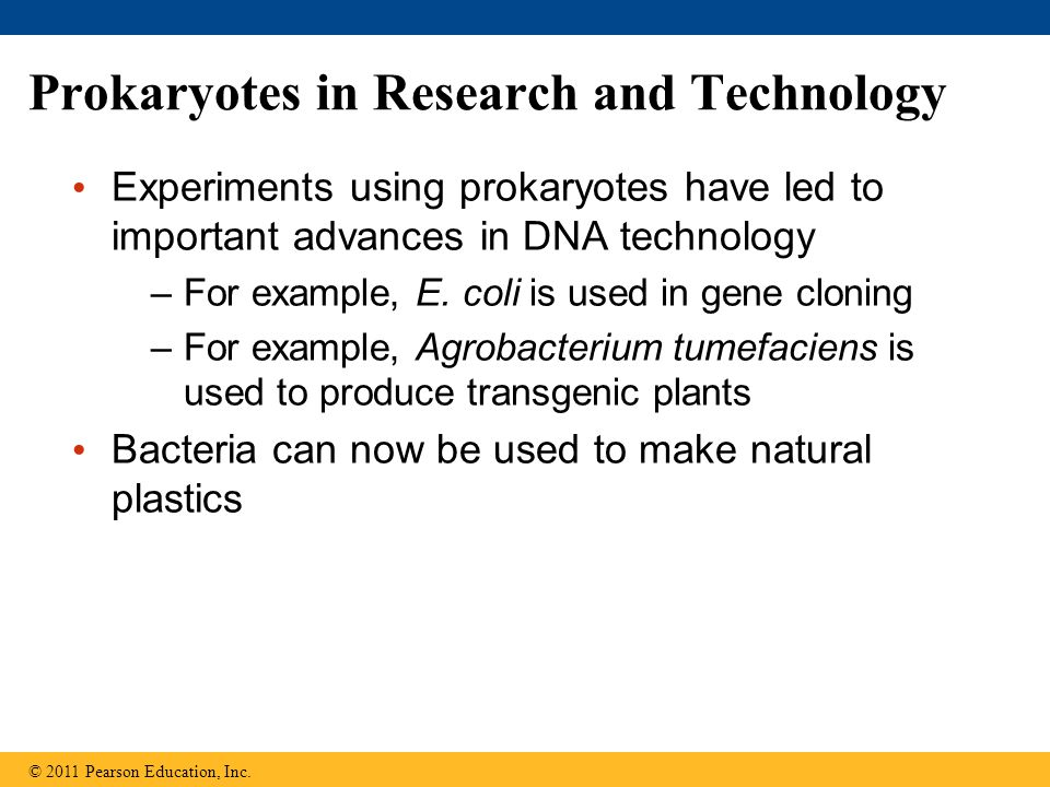 Prokaryotes in Research and Technology Experiments using prokaryotes have led to important advances in DNA technology –For example, E. coli is used in