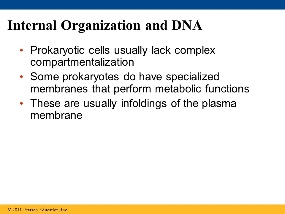 Internal Organization and DNA Prokaryotic cells usually lack complex compartmentalization Some prokaryotes do have specialized membranes that perform