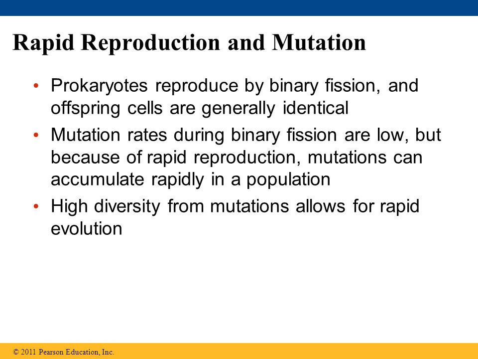 Rapid Reproduction and Mutation Prokaryotes reproduce by binary fission, and offspring cells are generally identical Mutation rates during binary fiss