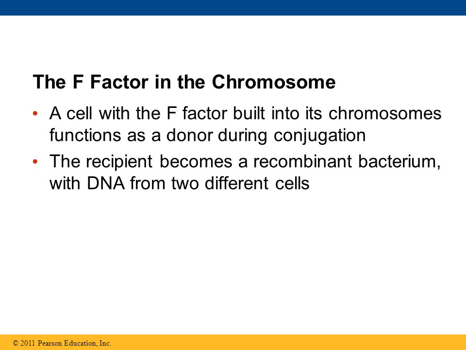 The F Factor in the Chromosome A cell with the F factor built into its chromosomes functions as a donor during conjugation The recipient becomes a rec