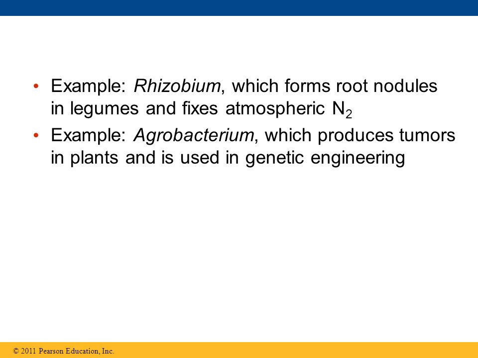 Example: Rhizobium, which forms root nodules in legumes and fixes atmospheric N 2 Example: Agrobacterium, which produces tumors in plants and is used