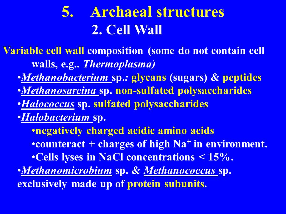 5.Archaeal structures 2. Cell Wall Variable cell wall composition (some do not contain cell walls, e.g.. Thermoplasma) Methanobacterium sp.: glycans (