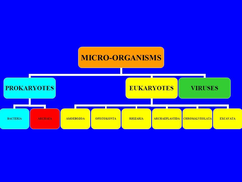 MICRO-ORGANISMS PROKARYOTES BACTERIAARCHAEA EUKARYOTES AMOEBOZOAOPISTOKONTARHIZARIAARCHAEPLASTIDACHROMALVEOLATAEXCAVATA VIRUSES