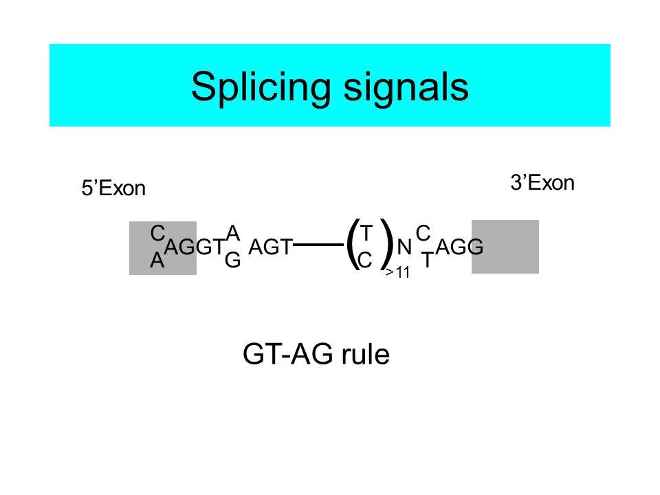 Splicing signals C A T C A G C T AGGT AGT N AGG () >11 5'Exon 3'Exon GT-AG rule