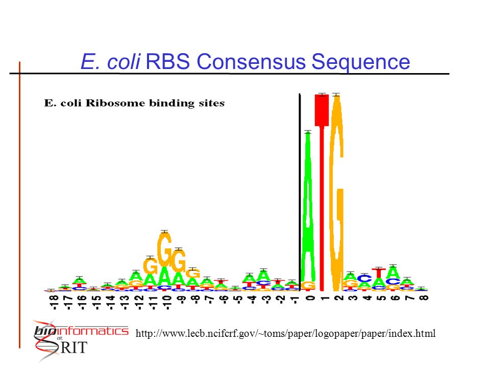 E. coli RBS Consensus Sequence http://www.lecb.ncifcrf.gov/~toms/paper/logopaper/paper/index.html