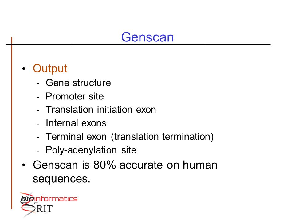 Genscan Output - Gene structure - Promoter site - Translation initiation exon - Internal exons - Terminal exon (translation termination) - Poly-adenylation site Genscan is 80% accurate on human sequences.