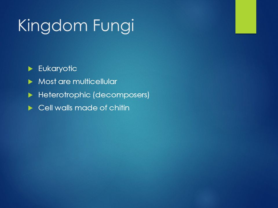 Kingdom Fungi  Eukaryotic  Most are multicellular  Heterotrophic (decomposers)  Cell walls made of chitin