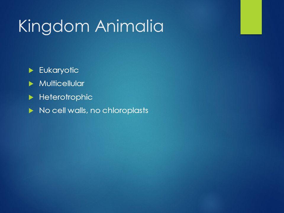 Kingdom Animalia  Eukaryotic  Multicellular  Heterotrophic  No cell walls, no chloroplasts