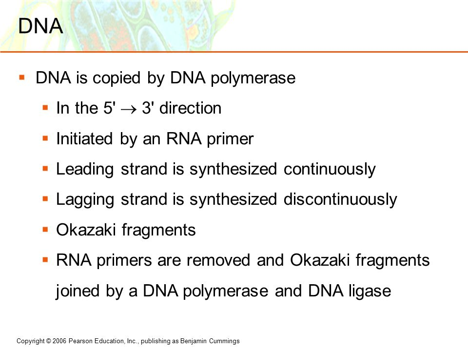 Copyright © 2006 Pearson Education, Inc., publishing as Benjamin Cummings DNA  DNA is copied by DNA polymerase  In the 5  3 direction  Initiated by an RNA primer  Leading strand is synthesized continuously  Lagging strand is synthesized discontinuously  Okazaki fragments  RNA primers are removed and Okazaki fragments joined by a DNA polymerase and DNA ligase