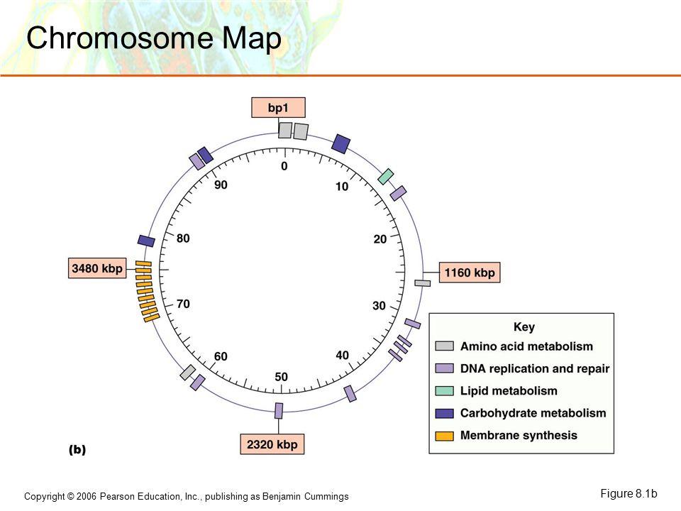Copyright © 2006 Pearson Education, Inc., publishing as Benjamin Cummings Chromosome Map Figure 8.1b