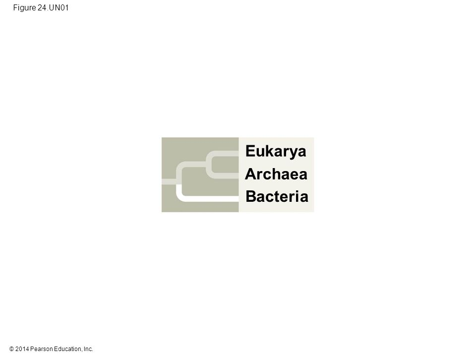 © 2014 Pearson Education, Inc. Figure 24.UN01 Eukarya Bacteria Archaea