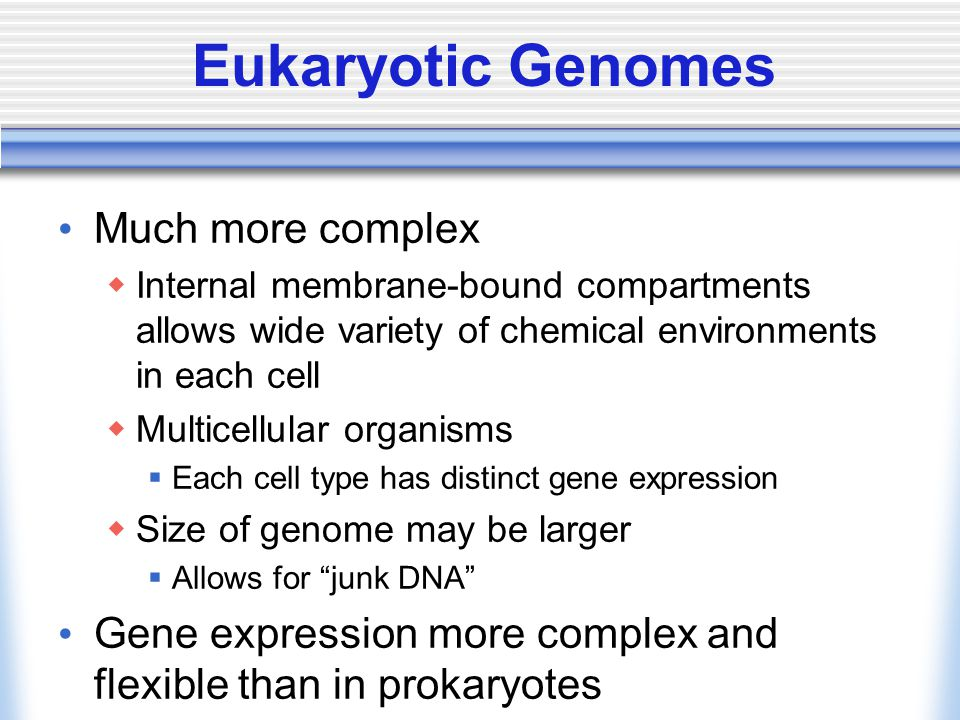 Eukaryotic Genomes Much more complex  Internal membrane-bound compartments allows wide variety of chemical environments in each cell  Multicellular