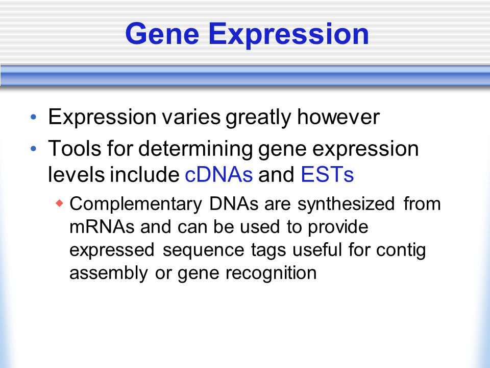 Gene Expression Expression varies greatly however Tools for determining gene expression levels include cDNAs and ESTs  Complementary DNAs are synthes