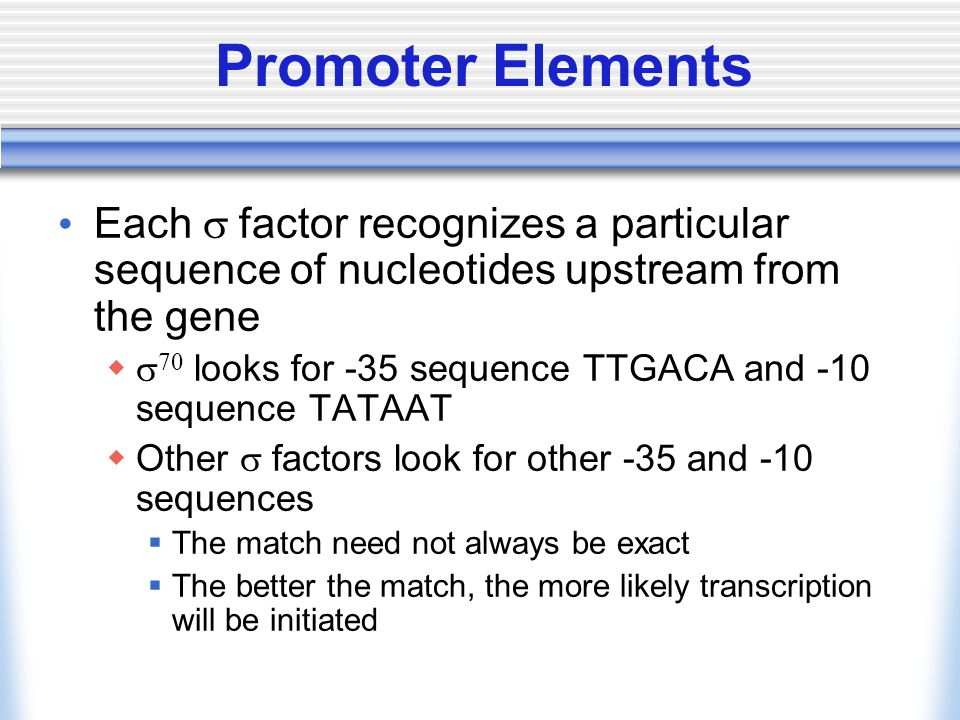 Promoter Elements Each  factor recognizes a particular sequence of nucleotides upstream from the gene    looks for -35 sequence TTGACA and -10 sequence TATAAT  Other  factors look for other -35 and -10 sequences  The match need not always be exact  The better the match, the more likely transcription will be initiated