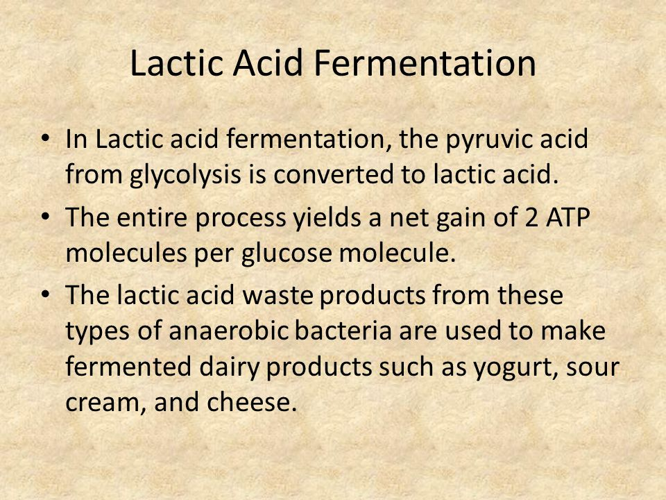 Lactic Acid Fermentation In Lactic acid fermentation, the pyruvic acid from glycolysis is converted to lactic acid. The entire process yields a net ga