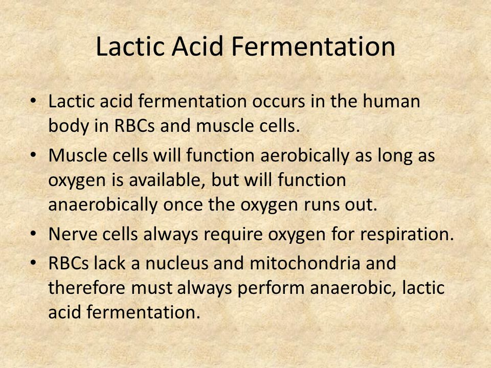 Lactic Acid Fermentation Lactic acid fermentation occurs in the human body in RBCs and muscle cells.