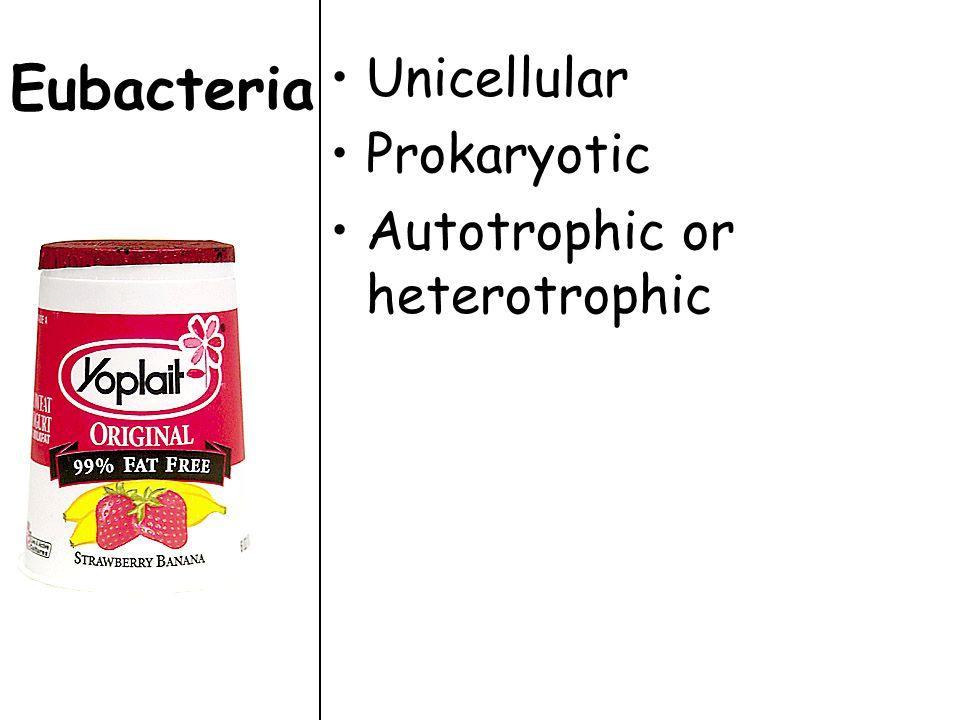 Eubacteria Unicellular Prokaryotic Autotrophic or heterotrophic