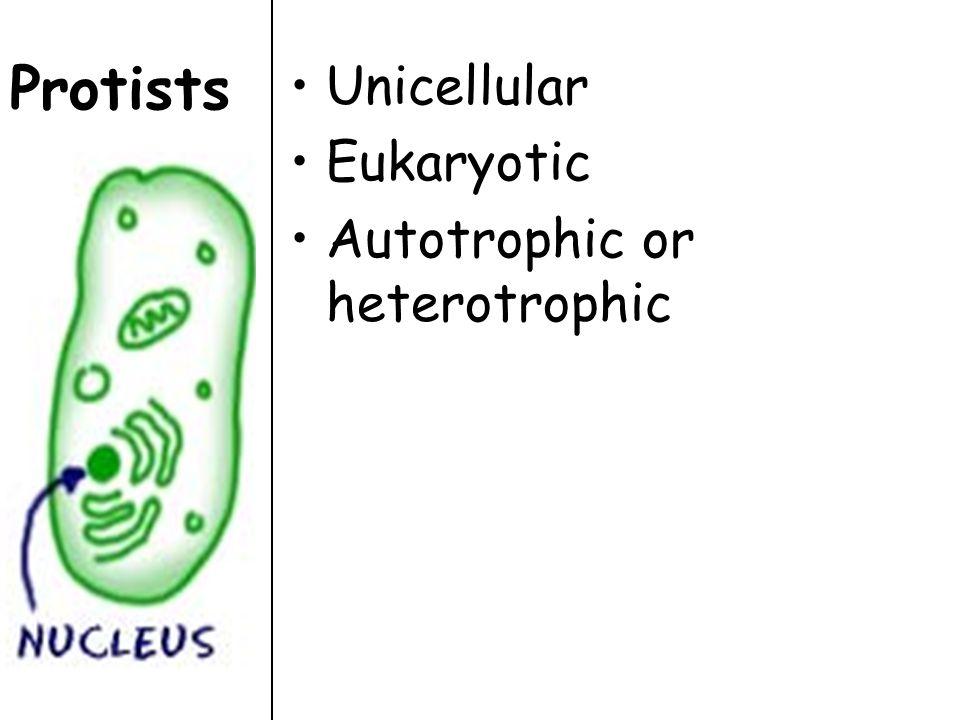 Protists Unicellular Eukaryotic Autotrophic or heterotrophic