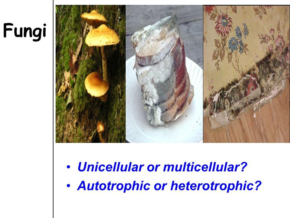Fungi Unicellular or multicellular? Autotrophic or heterotrophic?